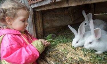 meisje bij een konijnenhok